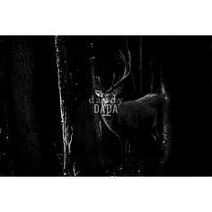 E' notte nella foresta, ma gli animali non dormono. Black and Wild collection by…