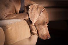 Mascotas en casa: Consejos para mantener la casa limpia Estudios recientes han avalado la idea de que vivir con mascotas es algo muy positivo para los niños y ancianos, tanto a nivel psicológico como de la salud, pues los bebés que crecen con un animal en casa lo hacen más libres de alergias. Sin…