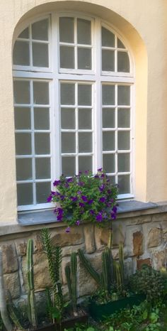 blooming petunias in a windowbox in Vienna in front of an old window in a garden in Pötzleinsdorf Petunias, Vienna, Bloom, Windows, Garden, Garten, Lawn And Garden, Outdoor, Window