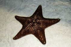 Starfish Starfish, Crates, Art, Art Background, Kunst, Performing Arts, Shipping Crates, Drawers, Art Education Resources