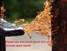 """We need a description without using the word """"teamwork"""" any ideas guys? Work Meaning, India Now, Photo Boards, Animals Of The World, Teamwork, Cool Photos, Amazing Photos, Leadership, Ants"""