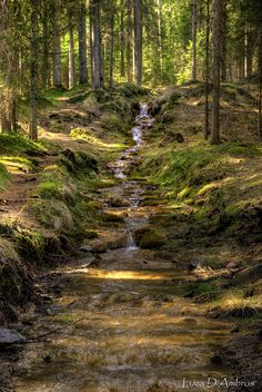Forest Stream -- MY DREAM TO HAVE when hubby & I retire. A bird sanctuary and places to sit & enjoy.