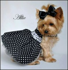 """Leslie H says, """"Owned By Yorkies recommended Yorkie Splash & Shine and we LOVE it !!"""" www.YorkieShampoo.com"""