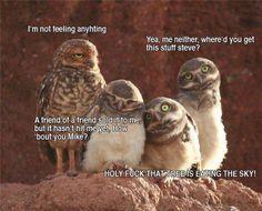 Tripping owls.