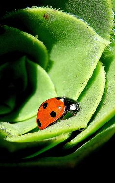 Living in the green... by Nicholas Lam | Flickr - Photo Sharing!