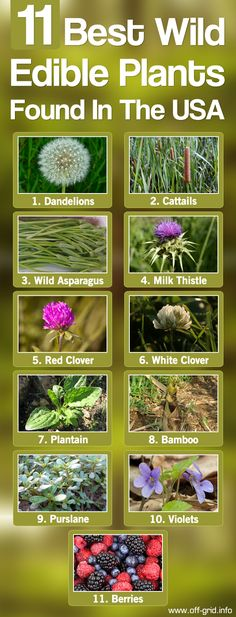 11 Best Wild Edible Plants Found In The USA