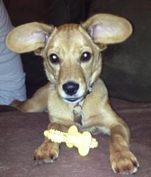 Puppy Linus