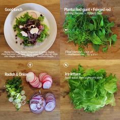 Good lunch – Final harvest on Plantui Giant red & Fringed red - 28 days. First Height blog – Day 6 / Second Height block – Day 16. Harvest Day, Smart Garden, 28 Days, Edible Flowers, Fresh Green, Flower Seeds, Grocery Store, Lettuce, Cabbage