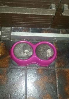 funny-bowl-kittens-sleeping-food