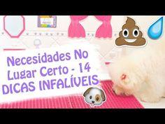 14 Dicas Infalíveis Para Ensinar Cachorro Ou Animal A Fazer Xixi e Cocô ...