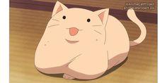 Gugure! Kokkuri-san ep2 >> #AnimeCat #FatCat #ShockedCat #WhiteCat Gugure! Kokkuri-san 繰繰れコックリさん