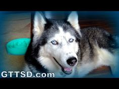 Gone to the Snow Dogs - YouTube