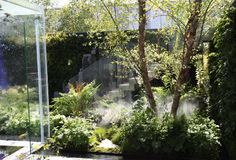 The  Mind's Eye, reflecting the experiences of sight loss to stimulate all the senses. #gardening #gardendesign #RHSChelsea