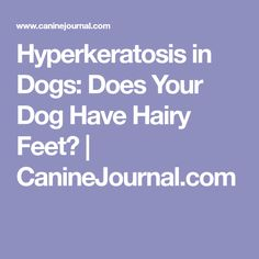 Does it look like your dog has hair growing on the bottom of his feet? You may want to schedule a visit to the vet immediately! Hair Growing, Grow Hair, Service Dogs, Dog Care, Schedule, Your Dog, Boxer, Timeline, Grow Longer Hair