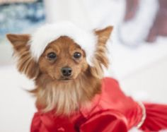 White Christmas Red Satin Dog Gown