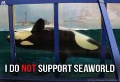 I do not support Seaworld