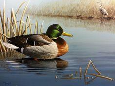 Original Waterfowl Paintings - Paul Makuchal's Art