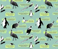 The Zoology of Exotic Birds fabric by primenumbergirl on Spoonflower - custom fabric