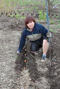 А мы сажаем картошку! Пошаговая инструкция — Сияние