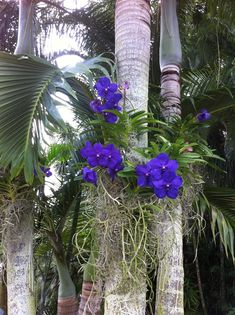 Orchids at RF Orchids great place to visit, free tour of beautiful garden.