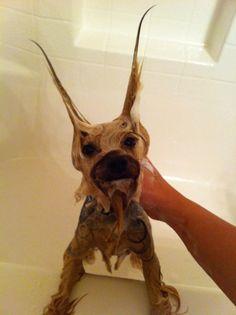 Bath Time Yorkie!