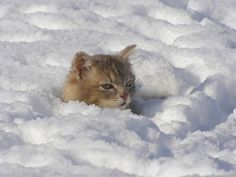 Oh ... I love snow