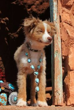 Image result for dogs wearing turquoise jewelry