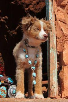 Too cute! This cute little dog is wearing turquoise Cute Little Dogs, I Love Dogs, Puppy Love, Cute Puppies, Cute Dogs, Dogs And Puppies, Baby Animals, Cute Animals, Estilo Hippie
