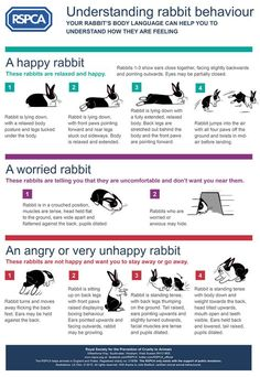 Understanding rabbit behaviour - Use this guide to help you recognise important body language signals. RSPCA
