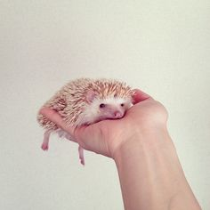 I think my heart melted just as much as this adorable, liquefied hedgehog.