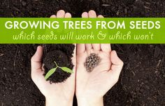 Growing trees from seeds: which seeds work, and which won't