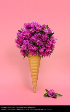 colourful flowers and blossom in ice-cream cone on pink background, colourful photo, still life photography Ice Cream Flower, Cream Flowers, Watercolor Wallpaper, Watercolor Flowers, Flower Crafts, Flower Art, Background For Photography, Photography Flowers, Colour Photography