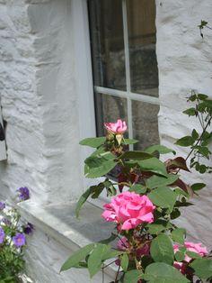 Blaenfforest Cottage Holidays in Newcastle Emlyn, Carmarthenshire