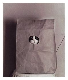 """Don't let the cat out of the bag!"""