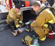 Firefighter Travis Timmins from Heartland Fire & Rescue revives tiny Chihuahua using oxygen mask meant for babies. (Jan/2012)
