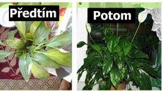 Umírá vám před očima vaše rostlinka? Zalijte ji touto zázračnou směsí a konečně vám zase ožije