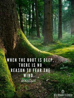 31 ideas travel quotes wanderlust friends truths for 2019 - Denglisch - Zitate Travel Quotes Wanderlust, Tree Quotes, Quotes About Trees, Hiking Quotes, Camp Quotes, Nature Quotes, Forest Quotes, Quotes About Nature, Wild Nature