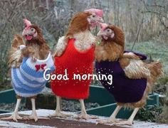 goodmorning+images+with+chickens | Good morning