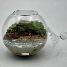 Terrario de musgo vivo en esfera de cristal de diámetro 10 cm. Todos los materiales, excepto el agua, son naturales. Natural, Home Decor, Moss Terrarium, Terrariums, Glass Boat, Mini Gardens, Unique Gifts, Water, Crystals