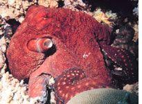 Octopus Intelligence - Slate Magazine 2008