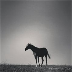 Glorious Heart &... #yearling #stallion #thoroughbredracing#horse #athlete#genetics#power#colt  #equinephotography#horseoftheday  #horsephotography#mdmfarm #sportsphotography#purosangue #horseracing#racing#horses#horse #horsepower#horsesofinstagram #thoroughbredsofinstagram #chevaux #cheval#thoroughbred#pursang #gallop #galop #equine #equestrian#caballo