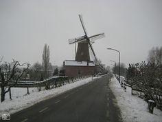 """Typisch Hollands plaatje: Graanmolen """"De Twee Gebroeders"""" aan de Maasdijk in Wijk en Aalburg"""
