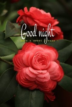 Good Night Flowers Qoutes Wishes Good Night Love Quotes, Romantic Good Night, Good Night Friends, Sweet Night, Good Night Wishes, Good Night Sweet Dreams, Good Morning Messages, Night Quotes, Evening Quotes