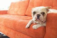 Honey looks so good on the Ava sofa!