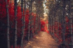 Guards by Ildiko Neer, via 500px