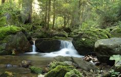 nature pictures - Search Yahoo Image Search Results