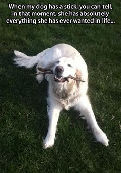 Happiest #dog in the world!  Have you joined our pet lover´s community yet? Click here and start sharing!