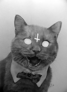 "Satan kitty says ""Stop trolling my pins!"" Dedicated to the people harassing me & my atheist friends here."