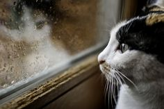 Rainy Day by Daniel Mansel Crazy Cat Lady, Crazy Cats, Kittens Cutest, Cats And Kittens, Sad Cat, Sad Kitty, Curiosity Killed The Cat, Raining Cats And Dogs, Here Kitty Kitty