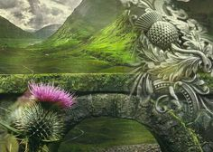 Thistle My work and my page - https://www.facebook.com/Outlander.Cizinka?ref_type=bookmark
